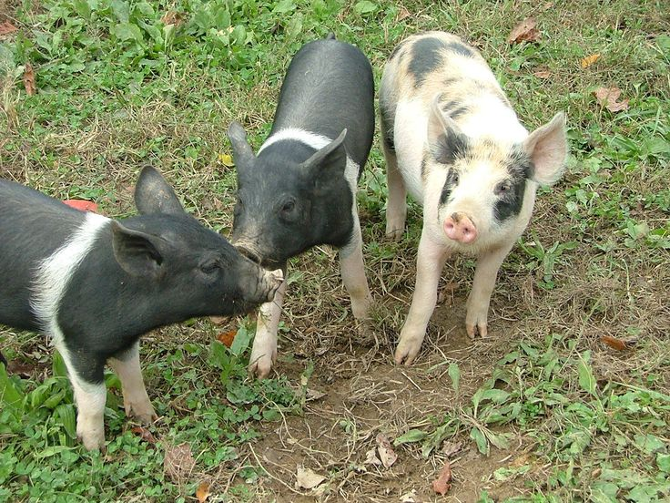 25 best ideas about Farm Animals Pictures on Pinterest  Baby