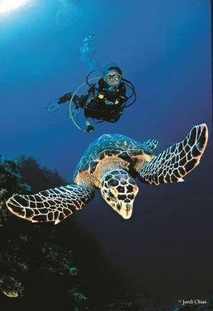 swim with sea turtles in hawaii
