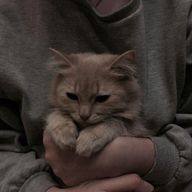 𝑫𝑻𝑴𝑺 Cat Aesthetic Cats Cute Animals