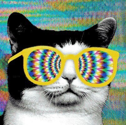 psicodelic cat