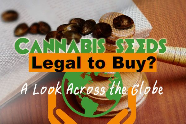 Are cannabis seeds legal to buy? A look at laws around the world. #cannabis #marijuana #stoners #weed #ganja #grow #organic #thc #cbd #sativa #indica #seeds #marijuanaseeds #cannabisseeds #pot #stoner #hightimes #cannabisculture #cannabiscommunity #weedstagram
