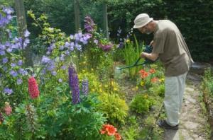 taking care of  your perennials: Time Enjoying, Garden Ideas, Flowers Healthy, Gardening Ideas, Perennial Flowers, Routine Maintenance, Gardening Outdoor, Gardening Plants Flowers Herbs