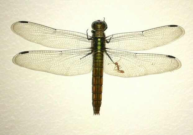 Dragon fly.........fly away.....