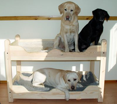 23 best images about bunk beds for dogs on pinterest for Big dog furniture