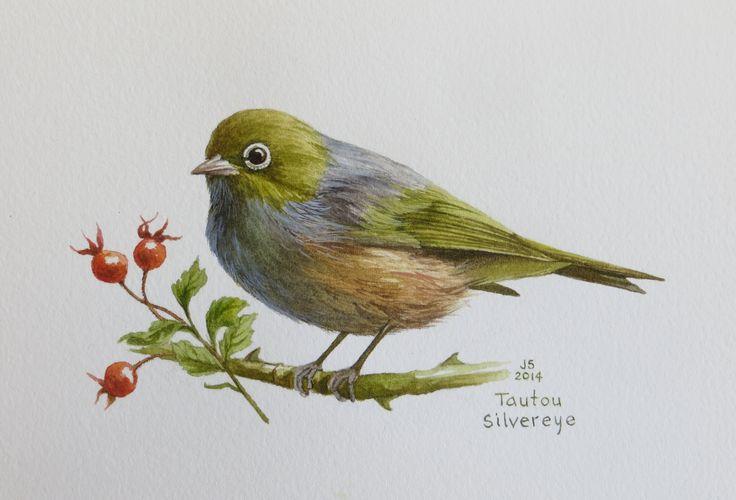 Tautou - Silvereye  watercolour Jane Sinclair