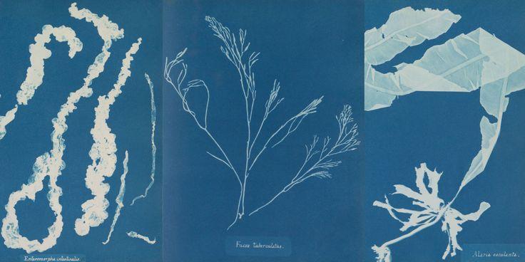 Blauwdrukken maken zoals de eerste vrouwelijke fotografe in 1843 deed, cynatopieën. Door gedroogd zeewier op, in water ondergedompeld papier te leggen en daar zonlicht op in te laten werken, ontstonden er (door de ijzerzouten in het water) blauwe kleuren op het papier en een witte afdruk van het zeewier.