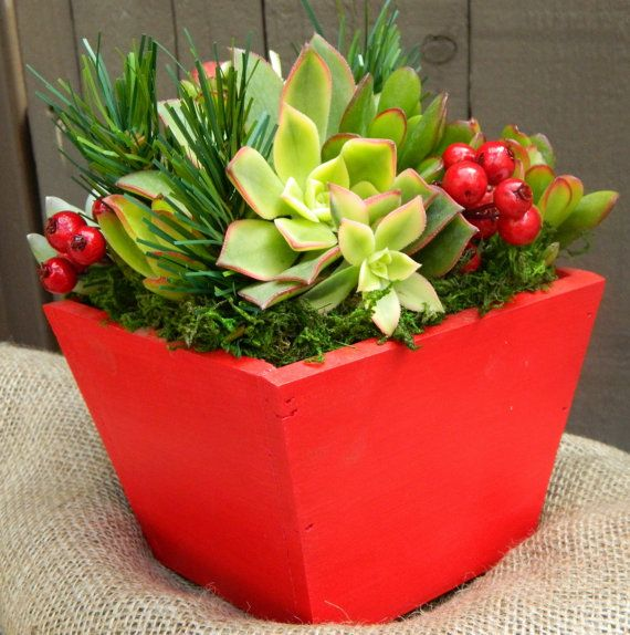 Succulent Centerpiece, Succulent Holiday Gift, Client Gift, Christmas Hostess Gift, Red Wooden Boxed Succulents,  Christmas Gift