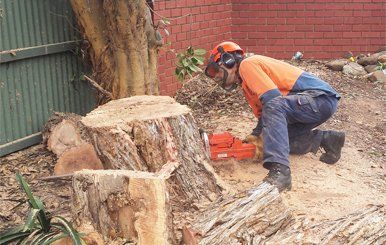 "With 15 years of experience in Tree Removal & stump removal in Adelaide. All Tree & Stump Removal is the Best Tree Removal Service Provider Company in Adelaide. We offer Palm tree, Stump Removal & Tree Cutting Services at affordable prices.""Your experts for tree management services in Adelaide"""