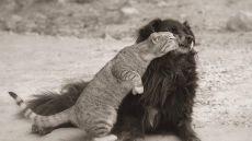 Если душа — это умение любить, быть преданным и благодарным, то животные обладают ею в большей степени, чем многие люди. © Джеймс Херриот
