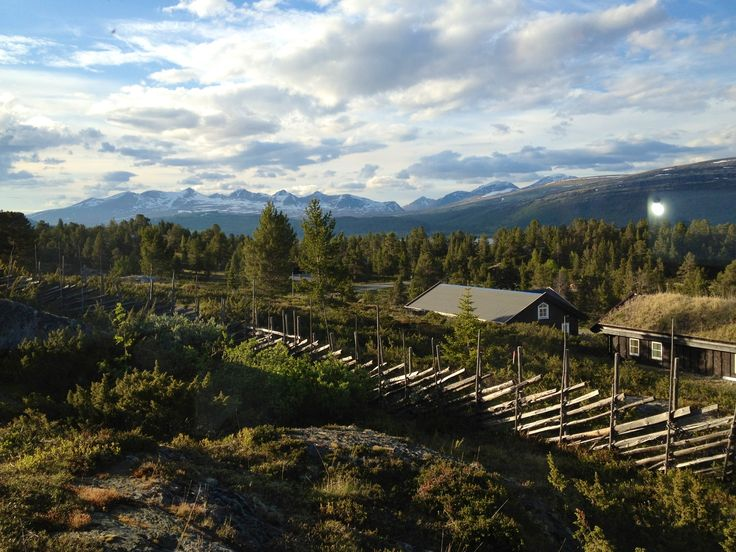 """Rondane"" Norway, from my 5 day horseriding trip last year:-)"
