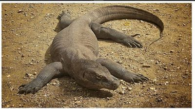 5 the Appeal of Komodo Island National Park in the East Nusa Tenggara  | Komodo Island, from his name we can guess what's there. Yes, the place of origin of animals that became one of the wonders of the world exists in Indonesia.  #vacation #destination #attraction #tourist #holiday #sightseeing #holidays #photography #selfie #indonesia #eastnusatenggara #komodo