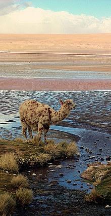 Atacama Desert, Chile – Natural Beauty in South America