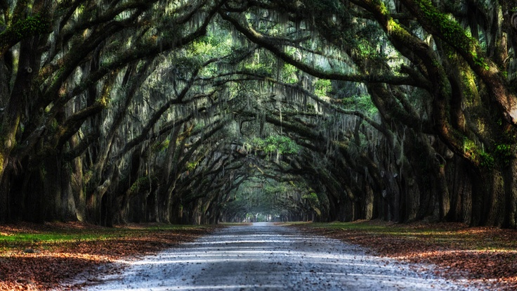 """Oak Avenue"" 