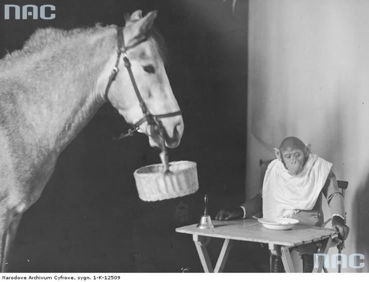 Staniewscy Circus, 1931.