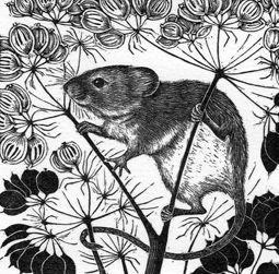Harvest Mouse ~ Wood Engraving ~ Rosamund Fowler