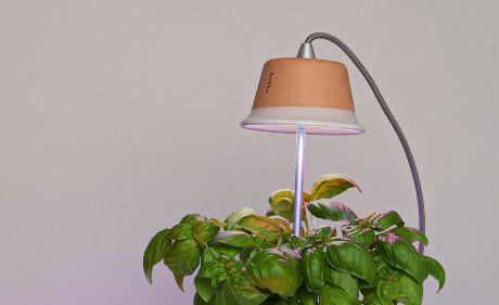 Cynara-pottery-grow-light5