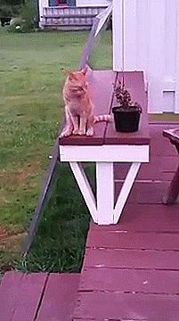 Wenn sich Katzen unbeobachtet fühlen