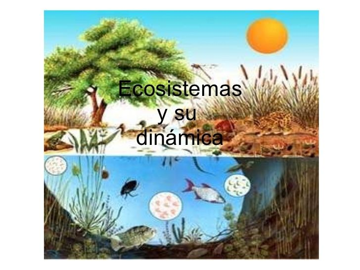 38 best ecosistemas de puerto rico images on pinterest knowledge ecosistemas y su dinmica fandeluxe Choice Image
