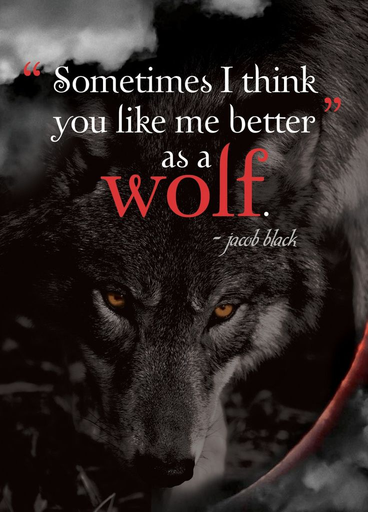 Like me better as a wolf... Eclipse Quote