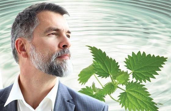 L'#ortica, oltre a favorire il benessere della #prostata, vanta altre proprietà utili per il #benessere maschile. Scopri di più leggendo l'articolo:  goo.gl/OcMO8i