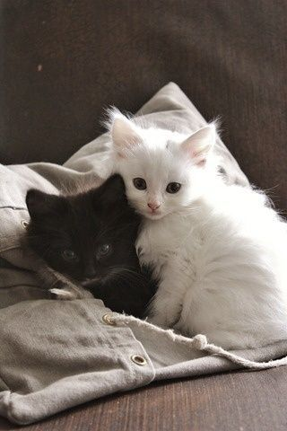 When I grow up I shall have two kittens. One shall be white and one shall black. And I shall call them Yin and Yang..