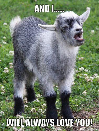 Fun with goats! #babygoatfarm