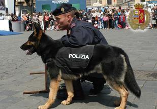 Cani poliziotto: chi sono e come adottarli a fine carriera – Petpassion.tv - http://www.forumcani.com/blog/2015/01/13/cani-poliziotto-chi-sono-e-come-adottarli-a-fine-carriera-petpassion-tv/