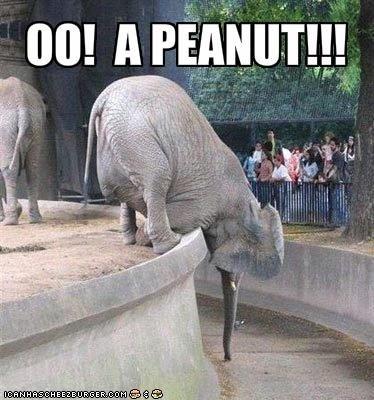 Ooh, a peanut!