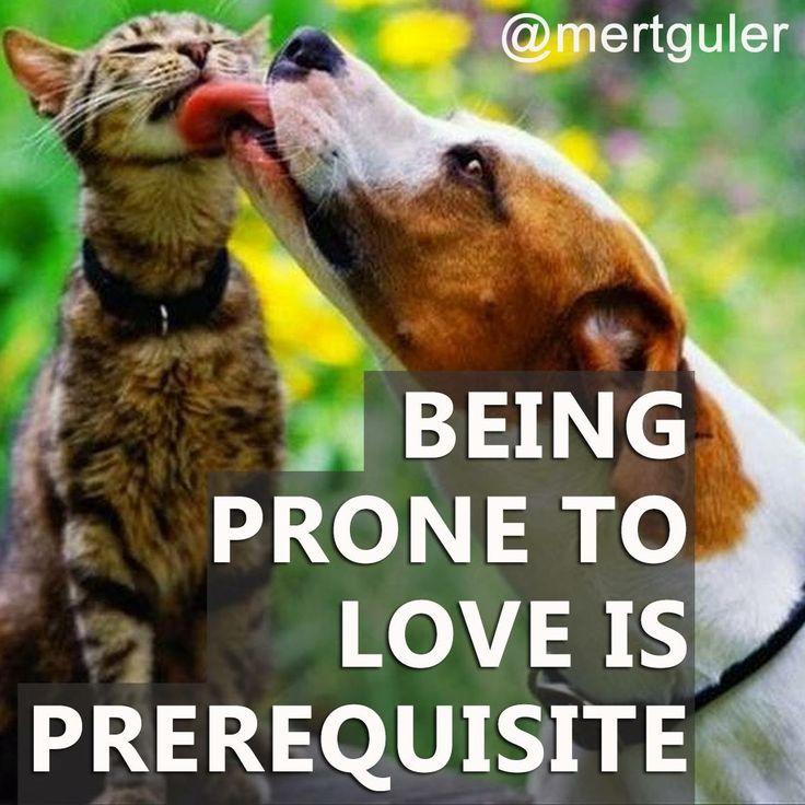 """Being prone to love is prerequisite..."" Mert Guler"