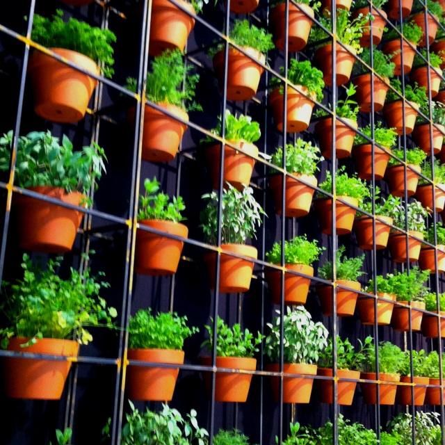 Vertical herb wall Living Wall Pinterest