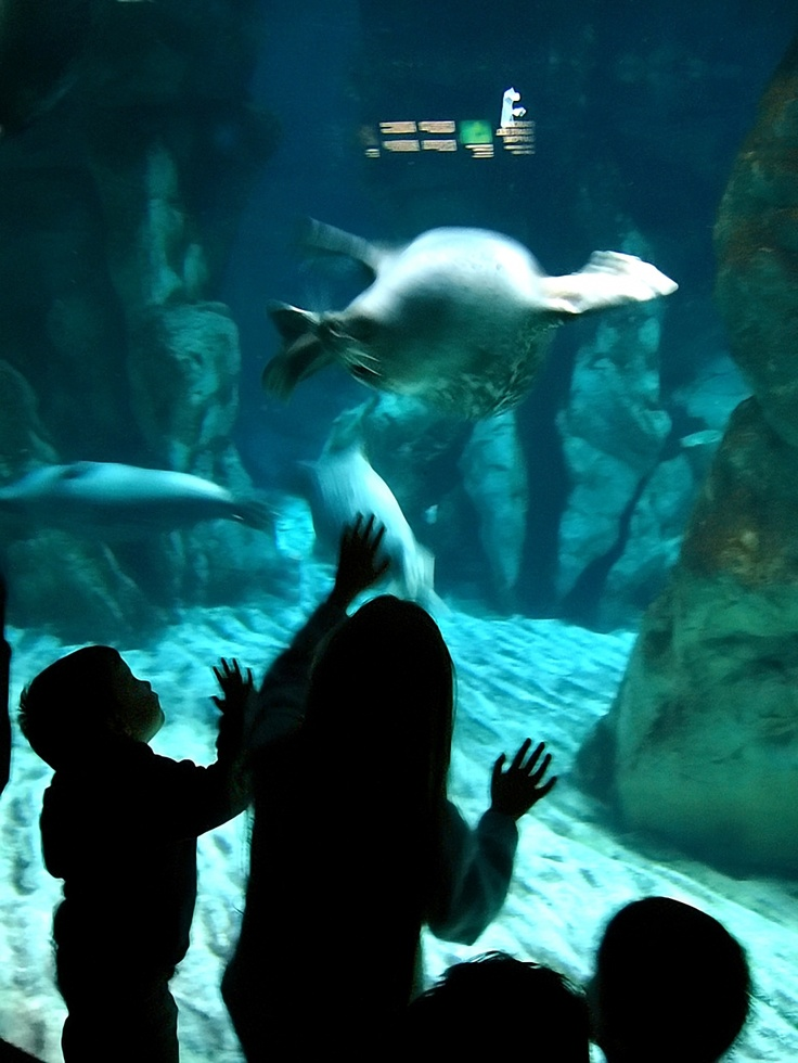 Aquarium, Genova, Italy