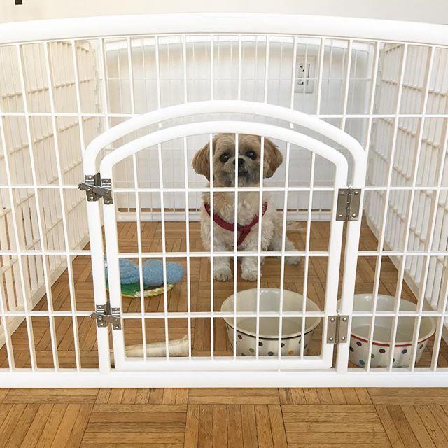 Cutie Louie In His Iris Usa Pet Pen Louie Gon With Images Animal Pen Louie Plastic Laundry Basket