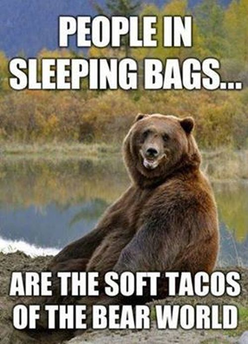Best Funny Bears Ideas On Pinterest Funny Captions Funny - 15 funny bears acting like humans