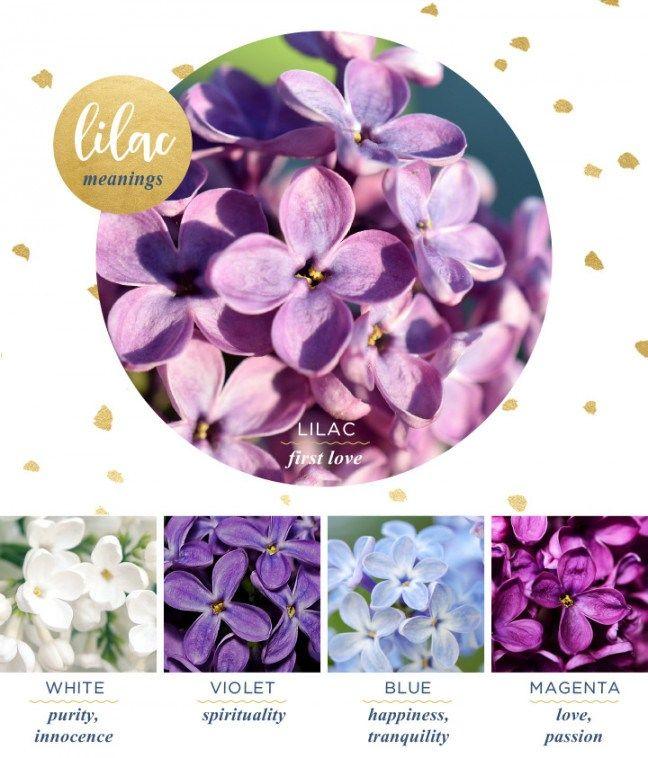 Hydrangea Meaning Symbolism History Proflowers In 2020 Flower Meanings Hydrangea Hydrangea Purple