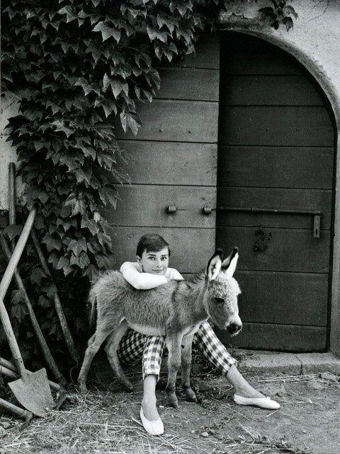 Miniature Donkey  And Audrey Hepburn.