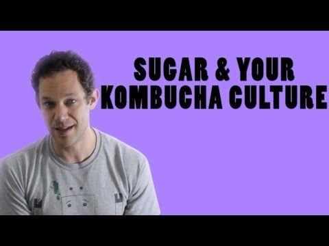 Kombucha Culture Recipe Question: Sugar And Your Kombucha Culture. Includes a link to a recommended kombucha culture/scoby. Make your own Kombucha!!!