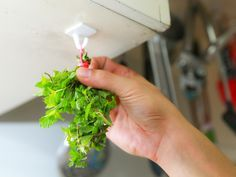 Preparar chá de hortelã usando apenas ingredientes naturais é um processo simples e fácil, e é também uma forma de ter sempre à mão um ótimo remédio caseiro para aliviar dores de estômago. Você só vai precisar de 2 ingredientes: folhas de h...