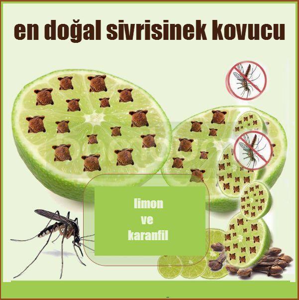Sivrisineklerinden Doğal Korunma Yolları - KizlarSoruyor