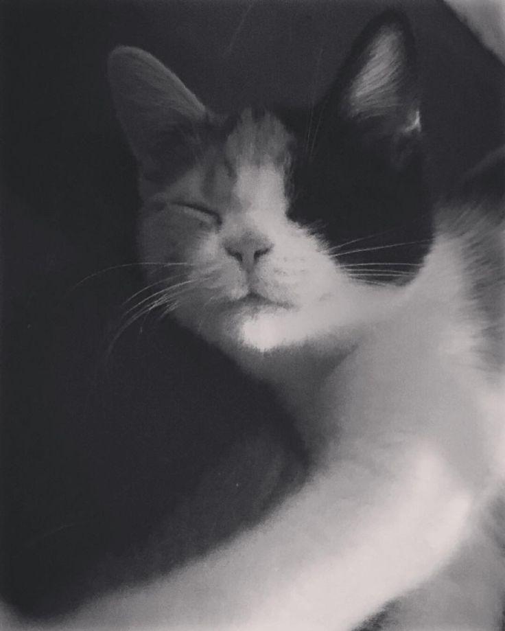 I just love her so much  #cat #cats #Diinadaring #catsagram #caramel #catstagram #instagood #kitten #kitty #kittens #pet #pets #animal #animals #petstagram #petsagram #photooftheday #catsofinstagram #ilovemycat #instagramcats #nature #catoftheday #lovecats #furry #sleeping #lovekittens #adorable #catlover #instacat