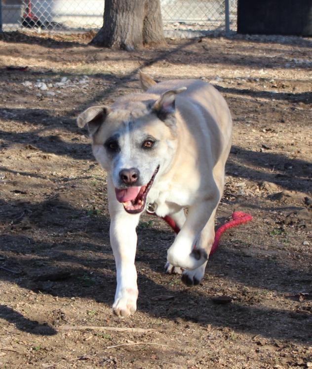 Adoptable Dogs in Wichita, KS Beauties and Beasts Dog