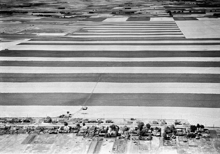 Strip-farming fields at harvest time on the outskirts of Lethbridge, Alberta / Champs cultivés en bandes à la saison des récoltes, en périphérie de Lethbridge (Alberta) | by BiblioArchives / LibraryArchives