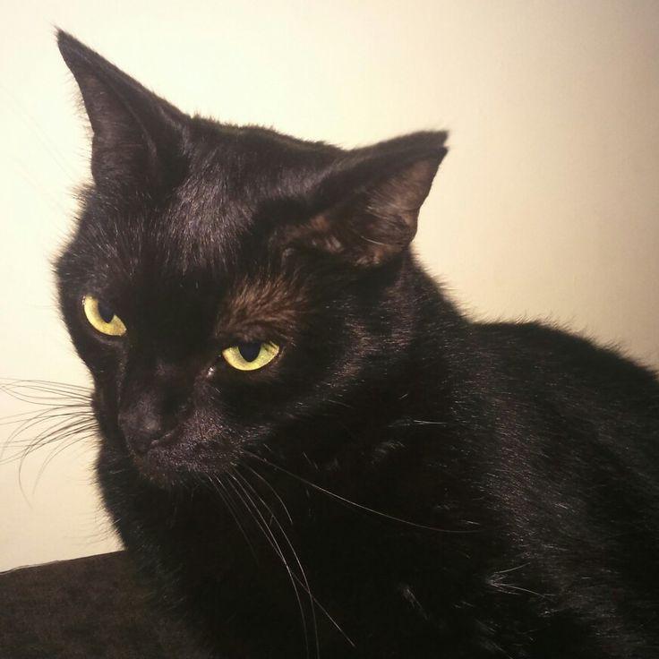 #czarnykot #puma #pupil # #lovely #cat