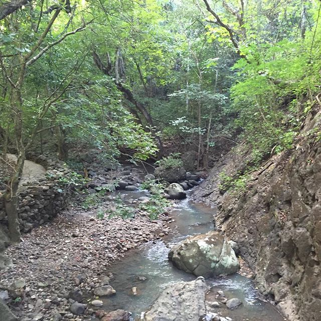 Bosque de #Cinquera #elsalvador #centroamerica #turismolocal #rios #hiking #toursv