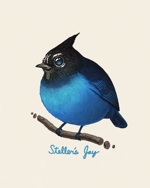 Fat Bird Paintings - Steller's Jay by Mike Mitchell