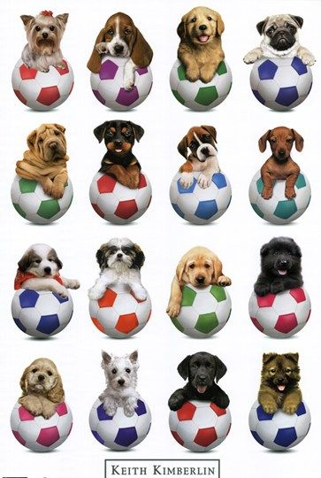 Soccer of Puppies