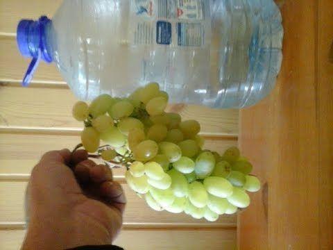 Самая простая и доступная обрезка винограда Суперрррр!