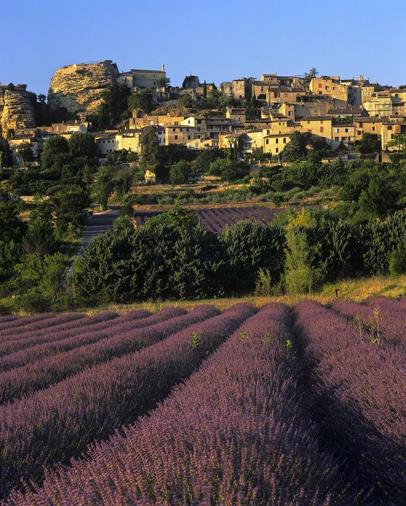 Lavender Town, Apt, Vaucluse France, hill town, town, lavender, route, perfection, groomed, fields, converging, rows photo
