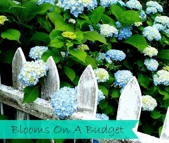 Blooms On A Budget Gardening Tipsflower