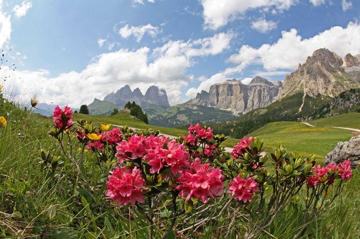 Paesaggi del Trentino