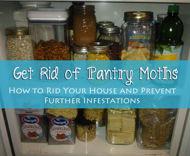 Superior Get Rid Of Pantry Moths On How To Just About Anything At Http://